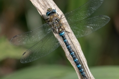 Jim_Munday-Male_Migrant_Hawker_at_Rest-10