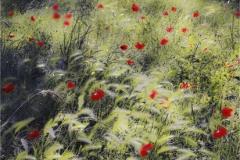 Michael_Davison-Provencalpoppies-10