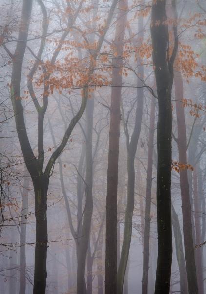 Jean-Brooks-Beech-Wood-in-Winter-9.5