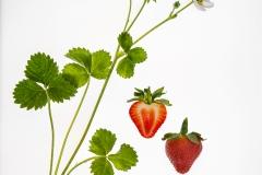 Lorna Brown-Strawberry-10