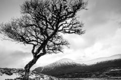 Sarah Nichol-Lone Tree-9.5