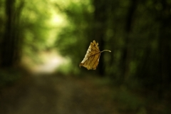 Andy_Bayes-Autumn-10