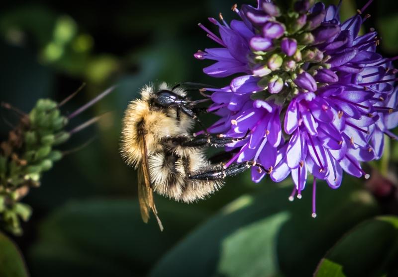 Stuart_Heir-Autumn_Bee-0714-9