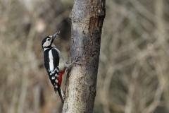 John_Wadd-Woodpecker-9