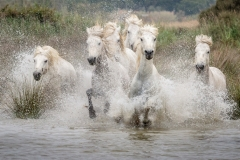 Gallop through the water