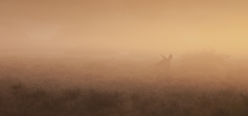 Stephen_Saunders-Deer_in_Morning_Mist-9.5