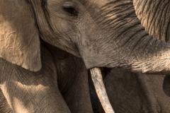 Sarah_Nichol-Elephant_Study-10