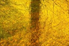 Elke_Epp-Eartham_Wood-10