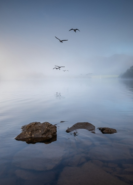 Andy-Bracey-Crummock-Geese-9.5