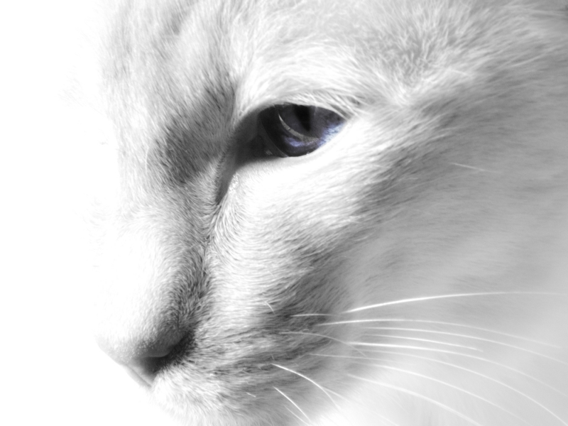 Ronnie Hall-Cats Eye-9