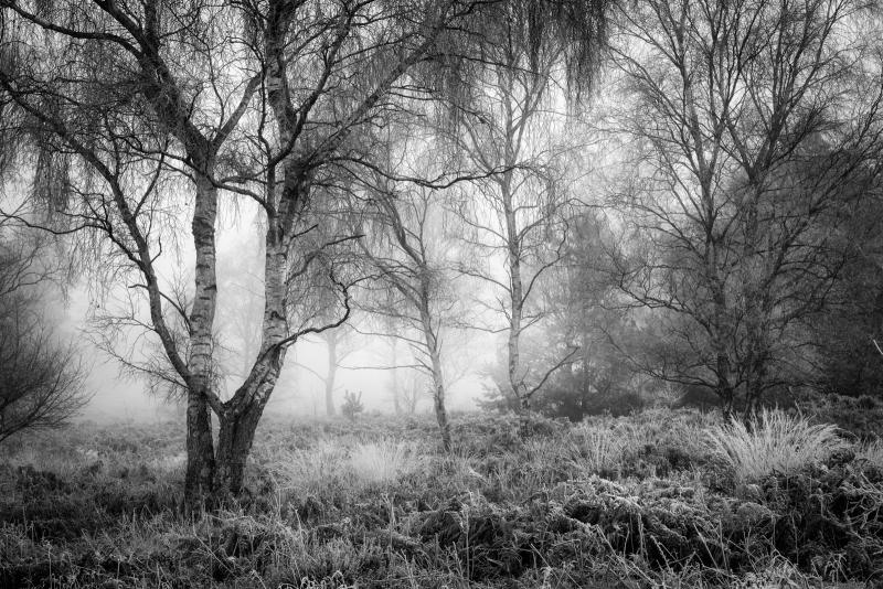 Richard_Corkrey-Heyshott_Common-10