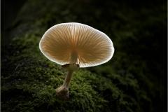 David_Harris-Porcelain_Mushroom-9