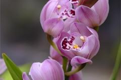 Jan_Davis-Orchid-9
