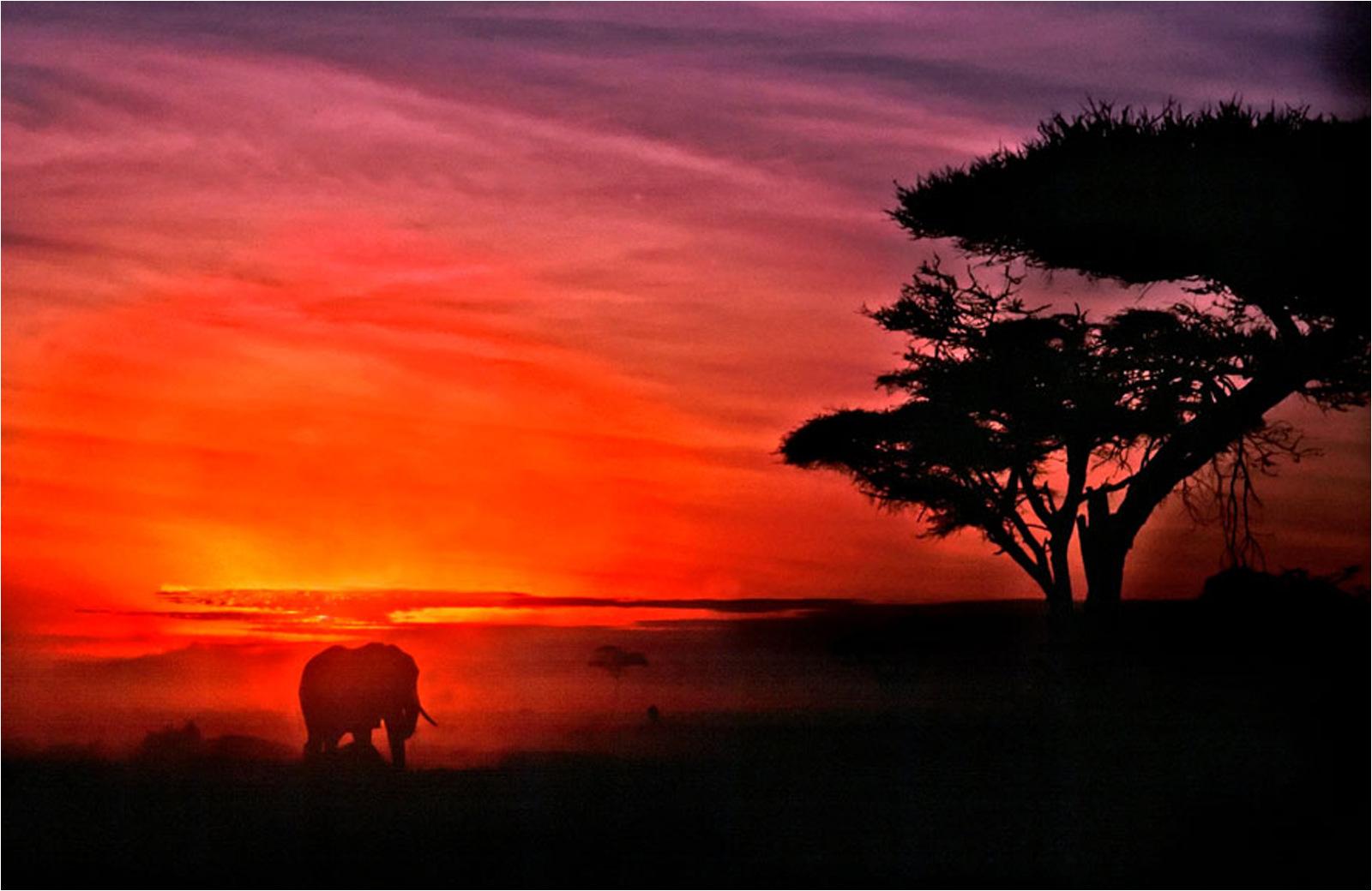 John-Larry-Elephant-at-Dawn-9