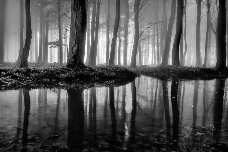 Andy_Dulson-Forest_Reflections-9.5