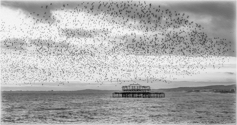 Ray_Acland-Brighton's-Starling-Murmuration-9