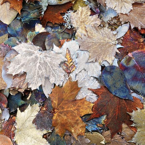 Sue_Nash-Jewelled_Autumn_Leaves-9