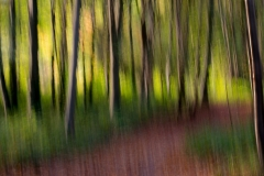 Jeff_Owen-Woodland_Impressions-9.5