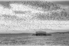 Ray_Acland-Brighton's-Starling-Murmuration-9
