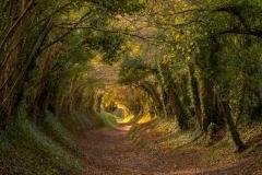 Wendy_Chalk-Tree_Tunnel-10