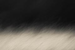 Elke_Epp-Blowing_in_the_Wind-9.5