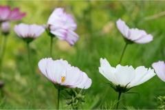 Linda_Bullimore-Inverewe_Flowers-9