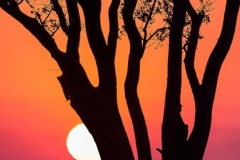 Stephen Tattersall-Early Morning in the Kruger Park-9.5