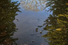 Edgar_Feldmanis-Puddle-9.5