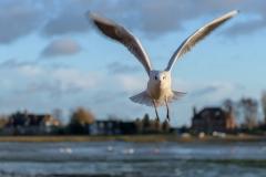 Taken at Emsworth Harbour, Bosham, West Sussex, United Kingdom, Monday, 01/01/2018. Photo by: Richard Ryder