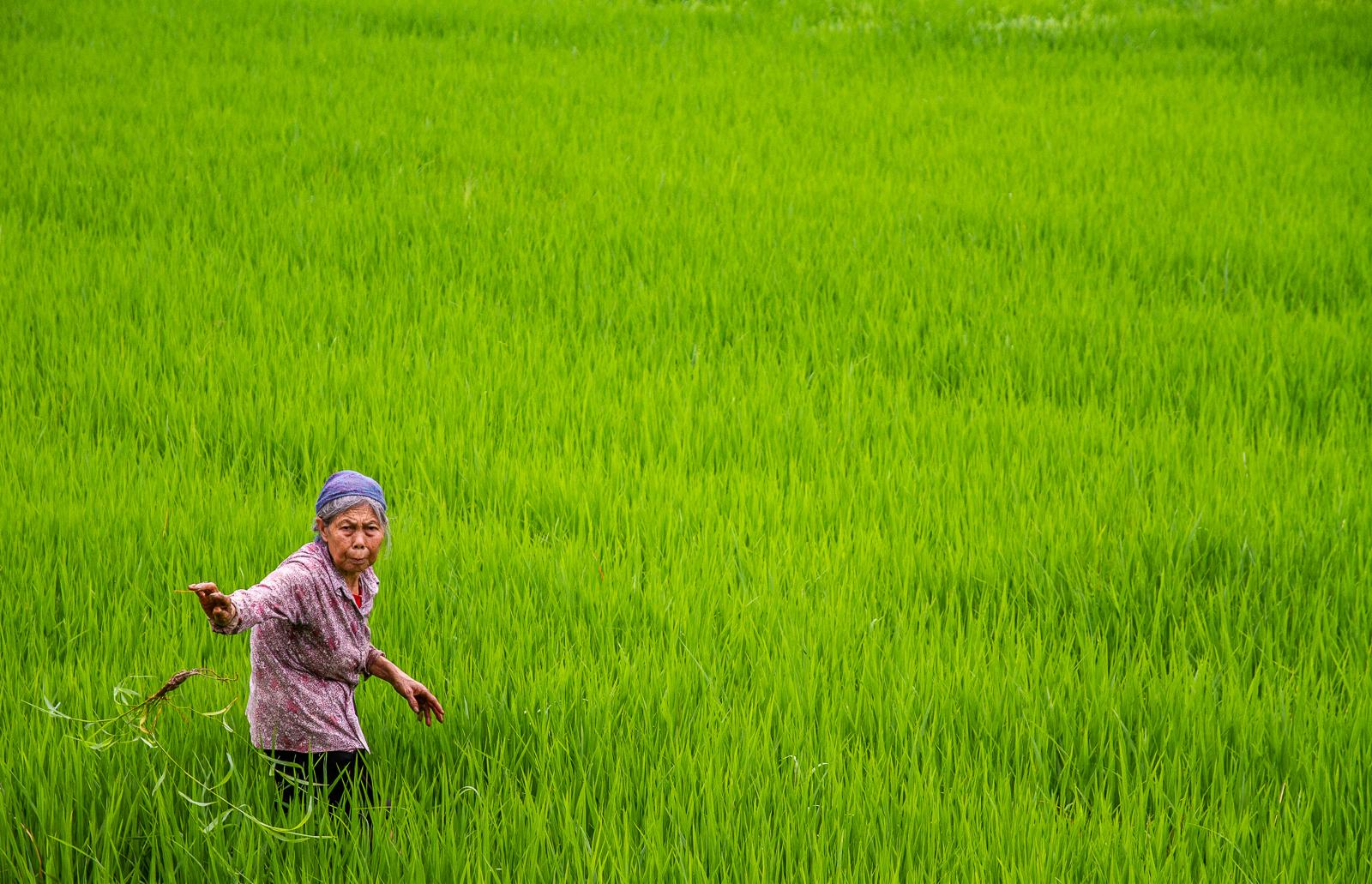Michael-Harris-Weeding-the-Rice-Paddy-10