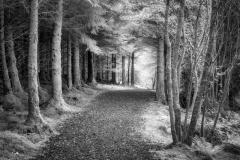 Richard_Corkrey-Coedydd_Beddgelert-10