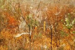 David Donati-Autumn Webs-9.5