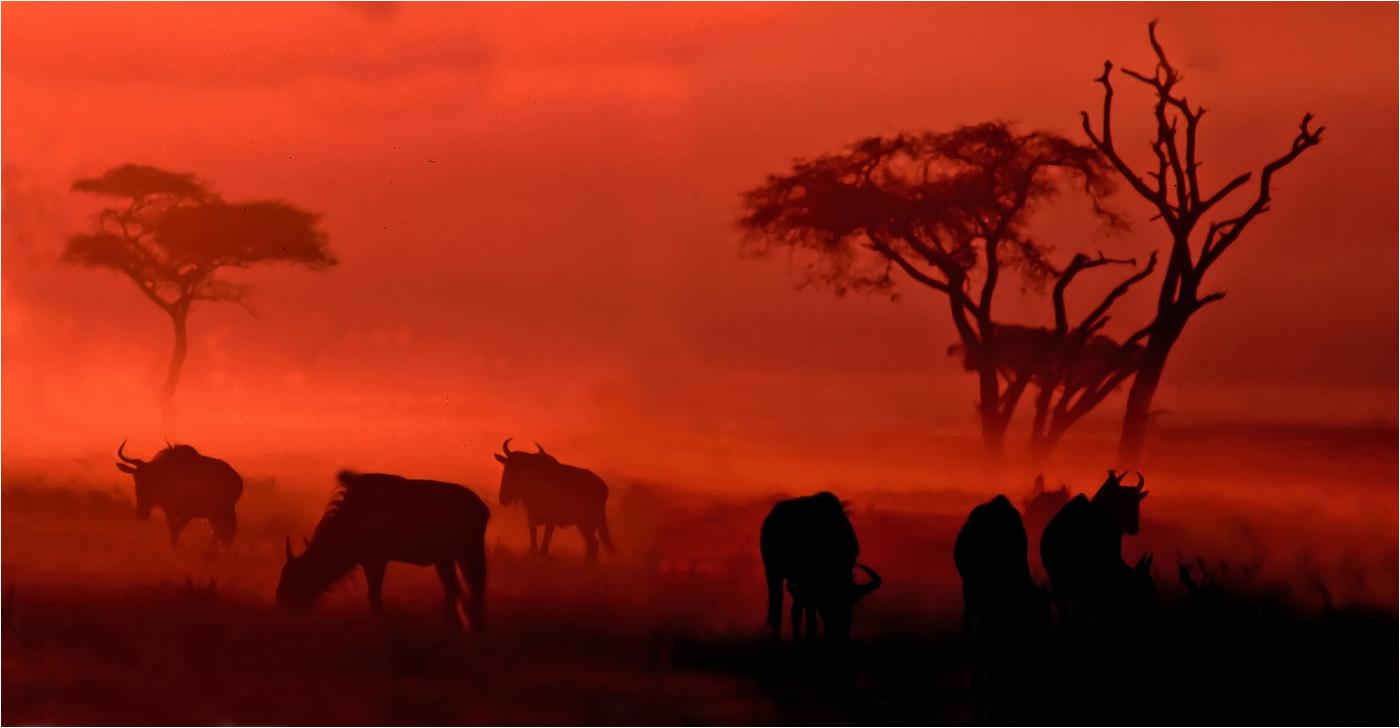 John Larry-Dawn in Africa-10