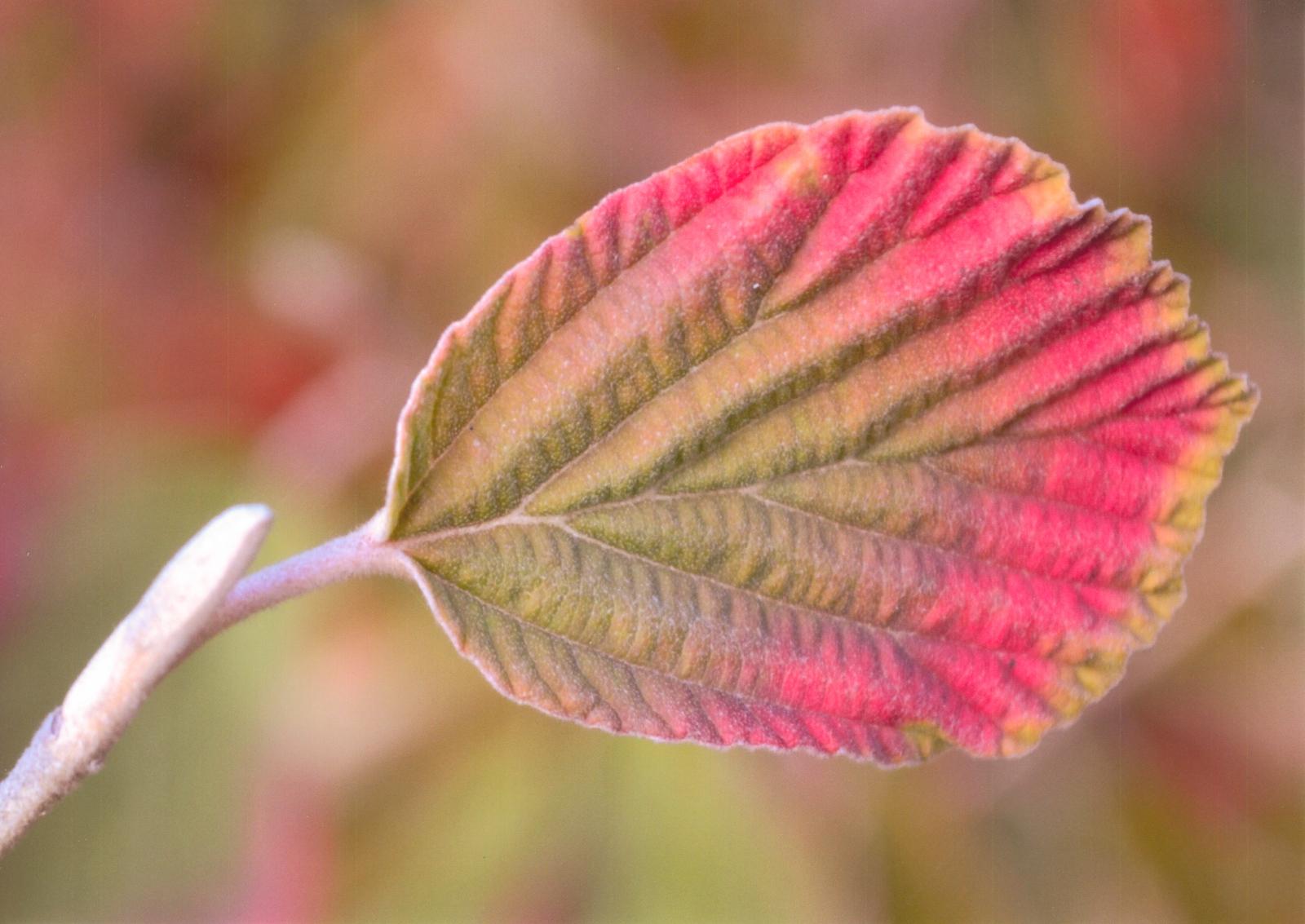 2_3-Autumn-Shades