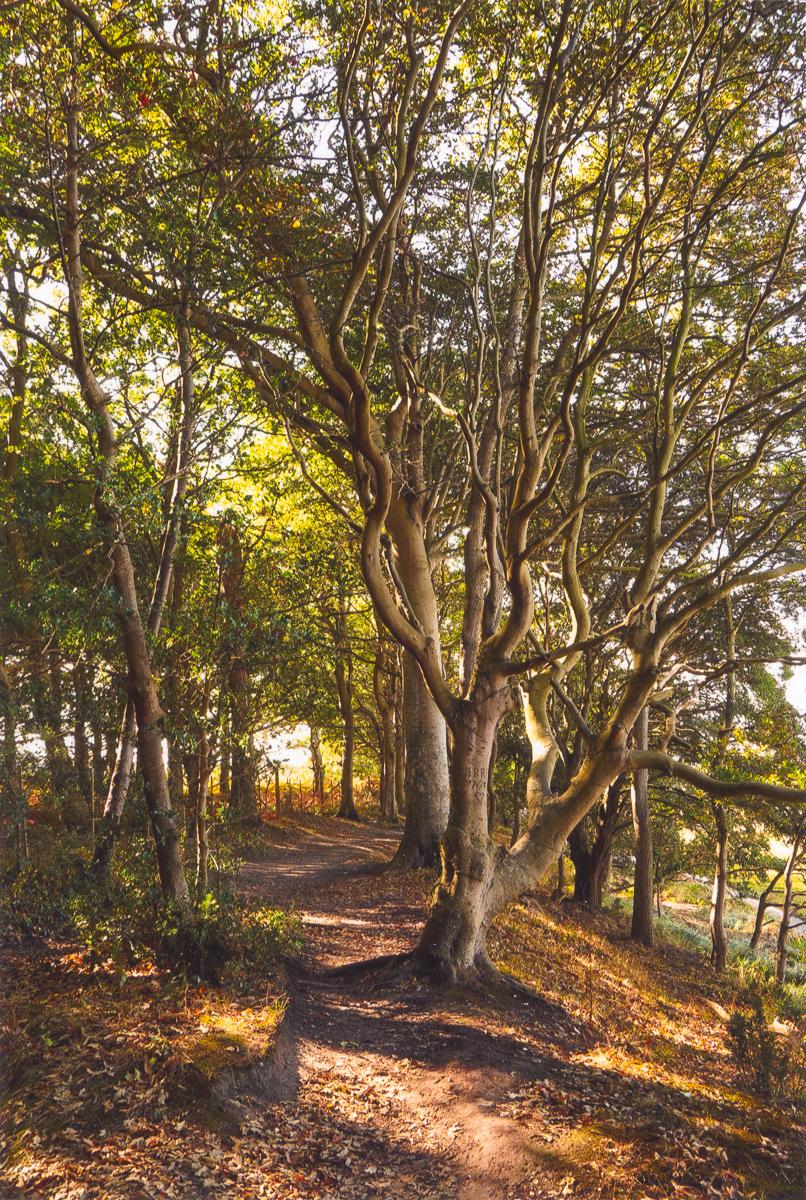 10.-Woodland-Walk