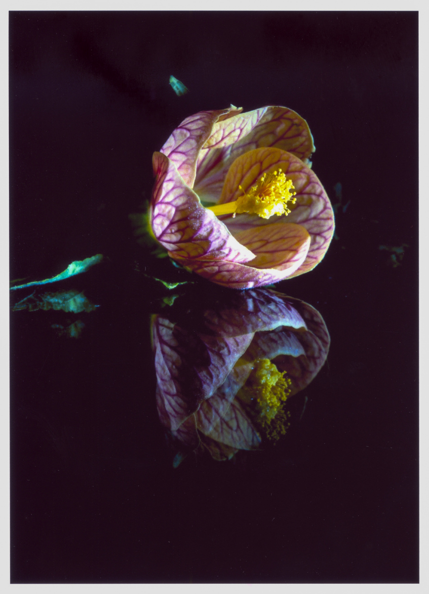 7-Flower-in-the-Night