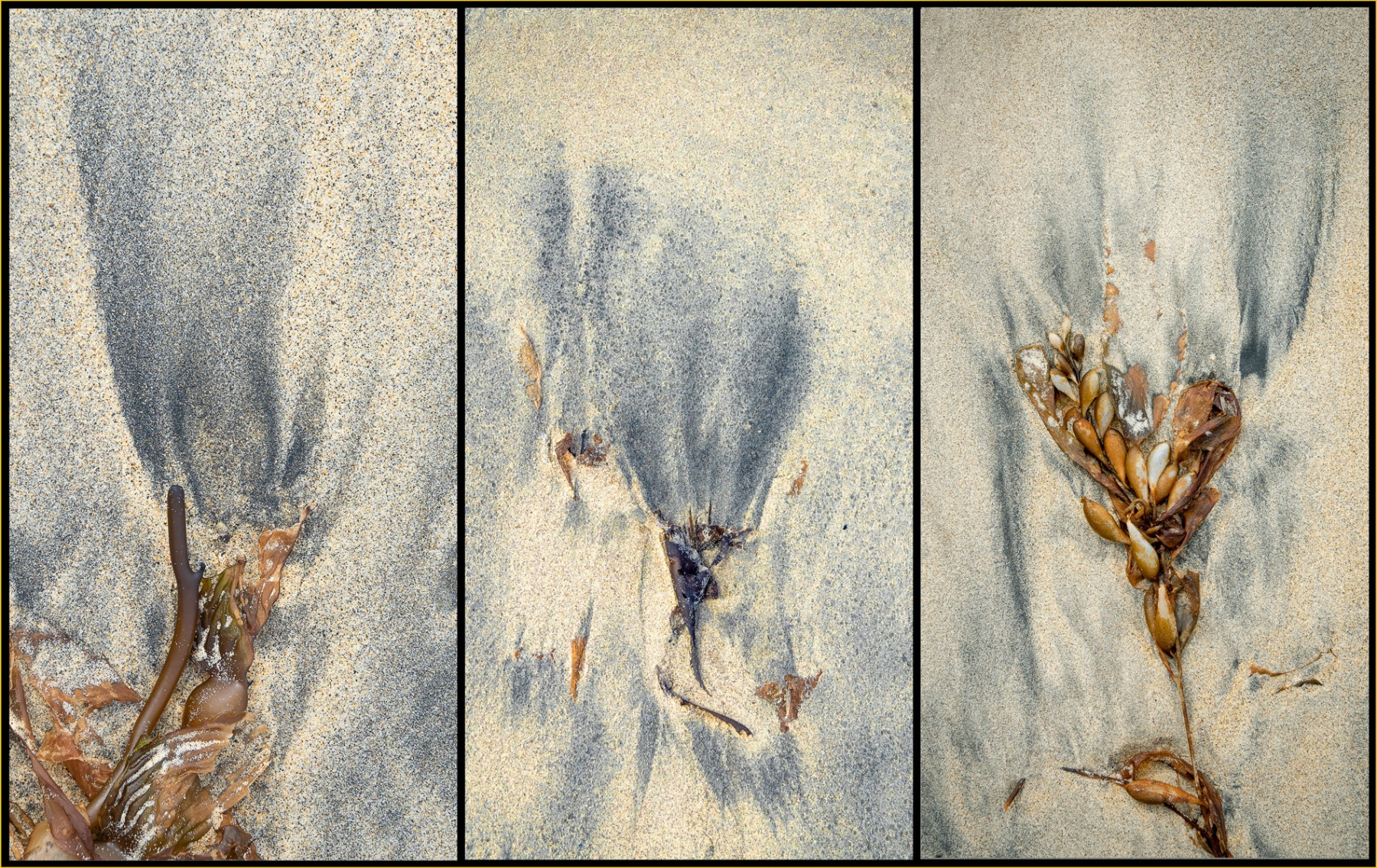 Linda-Bullimore-Black-Tulips-in-the-Sand-small